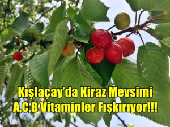 Kışlaçay'da Kiraz Mevsimi A,C,B Vitaminler Fışkırıyor!!!