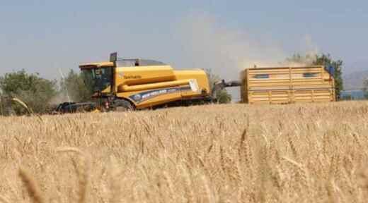 Kuraklık buğdayı vurdu, rekolte yüzde 70 azaldı.