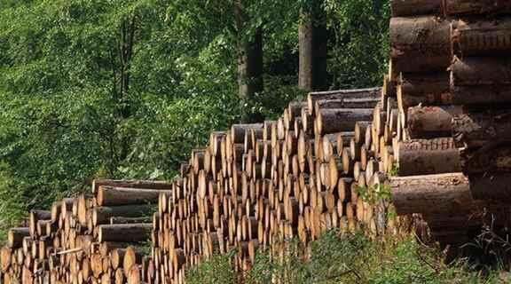 Zati İhtiyaç Yakacak Odun Satışı Başlamıştır!!