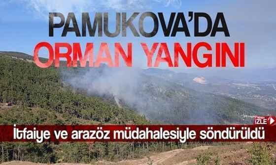 Pamukova'da çıkan yangın ormana sıçradı..