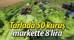 Tarlada 50 Kuruş, Markette 8 Lira.